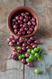 Ripe red and green gooseberry in bowls Royalty Free Stock Photography