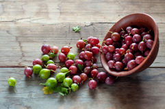 Ripe red and green gooseberry in bowls Royalty Free Stock Photo