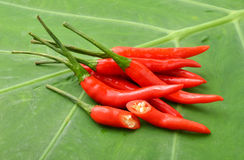 Ripe red  hot chili peppers on a leaf Stock Photos
