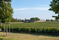Ripe red Merlot grapes on rows of vines in a vienyard before the wine harvest in Saint Emilion region. France royalty free stock photos