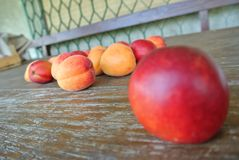 Ripe red nectarine and orange apricots on rustic wooden table Royalty Free Stock Photos