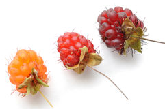 Ripe red and orange wild raspberries Stock Photos