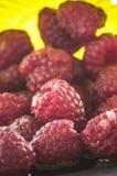 Ripe red organic raspberries farm fresh Stock Photography