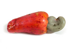 Ripe red Cashew Fruit, Marañon. Royalty Free Stock Photo