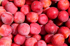 Ripe red plums. The reaped crop Stock Image