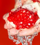 Ripe red pomegranate in her hand in water.  stock images