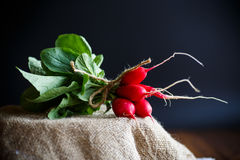 Ripe red radish with foliage. On a black background Royalty Free Stock Image