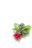Ripe red radish with foliage. On a white background Stock Photo