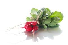 Ripe red radish with foliage. On a white background Stock Image