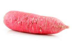 Ripe Red Radish Isolated on White Royalty Free Stock Images