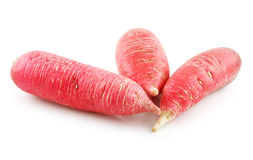 Ripe Red Radish Vegetable Isolated on White Stock Images