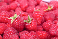 Ripe Red Raspberries Royalty Free Stock Images