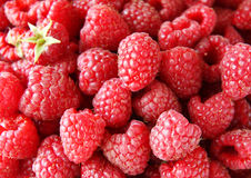 Ripe red raspberries Stock Image