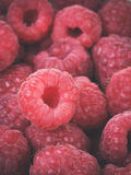 Ripe red raspberries background Stock Images