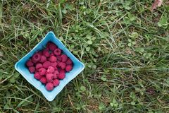 Ripe red raspberries Royalty Free Stock Image