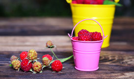 Ripe red raspberries in an iron bucket Royalty Free Stock Photo