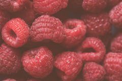 Ripe red raspberries macro. Background fade Royalty Free Stock Images