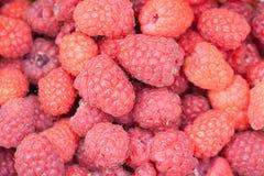 Ripe red raspberries Rubus idaeus. background Stock Photography