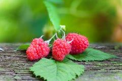 Ripe red raspberries Royalty Free Stock Image