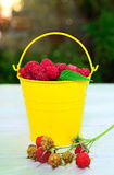 Ripe red raspberries in a yellow iron bucket. On a wooden table Royalty Free Stock Photography