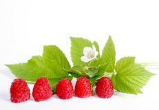 Ripe Red Raspberry Royalty Free Stock Images