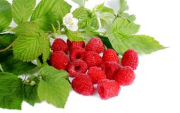 Ripe Red Raspberry Stock Photography