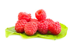 Ripe red raspberry on green laeves Stock Photos