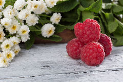 Ripe red raspberry. Represented on white wooden background. Some raspberries nive idea for any background Stock Image