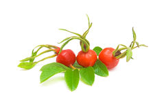 Ripe red rose hips. Ripe red rose hips in close-up on a white background Royalty Free Stock Photography