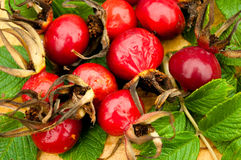 Ripe red rose hips with leaves outdoors Stock Photo