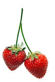 Ripe red strawberries Stock Photos