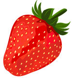 Ripe red strawberries. Royalty Free Stock Photo