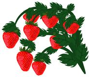 Ripe red strawberries. Stock Photography