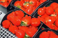 Ripe red strawberries Stock Images