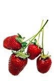 Ripe red strawberries Stock Image
