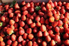 Ripe red strawberries at a farmers market Stock Image