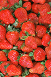Ripe red strawberry Stock Images