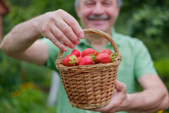 Ripe red strawberry on green grass Royalty Free Stock Images