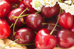 Ripe red sweet cherries closeup Royalty Free Stock Photography