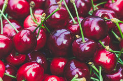 Ripe red sweet cherry. Agricultural background. Ripe red organic sweet cherry in the summer. Closeup. Agricultural background Stock Images