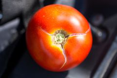 Ripe red tomato closeup. Stock Photos