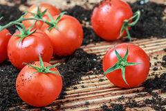 Ripe red tomato on the ground Royalty Free Stock Photography