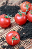 Ripe red tomato on the ground Stock Photo