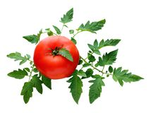 Ripe red tomato with leaves. Isolation, white background under clipping path Royalty Free Stock Photos