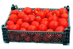 Ripe red tomatoes in a black plastic box isolated Royalty Free Stock Image