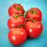 Ripe red tomatoes on blue background Stock Photography