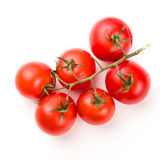 Ripe red Tomatoes on the branch Stock Image