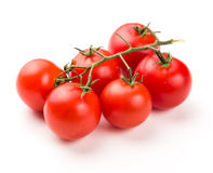 Ripe red Tomatoes on the branch Royalty Free Stock Images