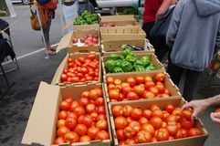 Beautiful produce at farmers` market, Arcata, CA. Ripe red tomatoes, green bell peppers and glowing purple eggplant are prominently displayed at a farmers` Stock Photography