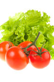 Ripe red tomatoes and green leaves of salad. Stock Photography